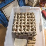 Field Cricket Breeding Box